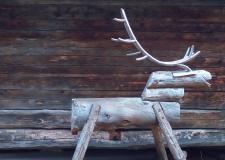 Reja severnih jelenov brez meja, Laponska – med Finsko in Norveško (3)